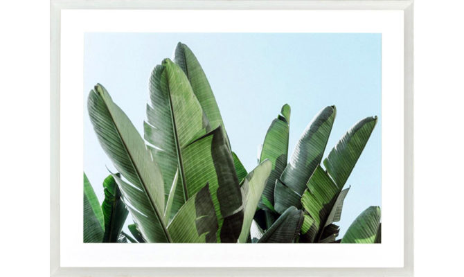 Banana Leaves / Print – DA473 Product Image