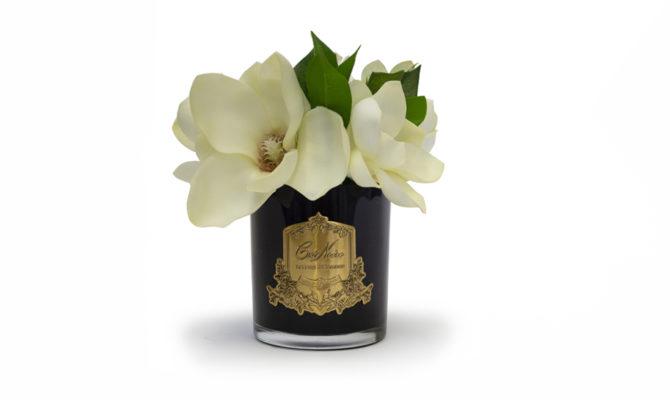 CÔTE NOIRE – Magnolias Product Image