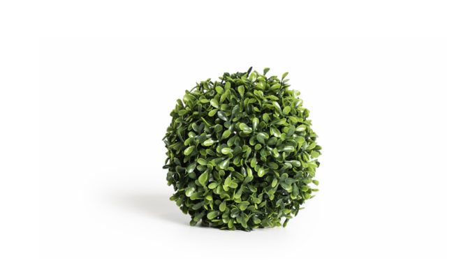 French Boxwood 18cm Product Image