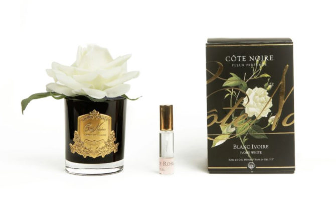 Côte Noire – French Single Rose – Ivory Product Image