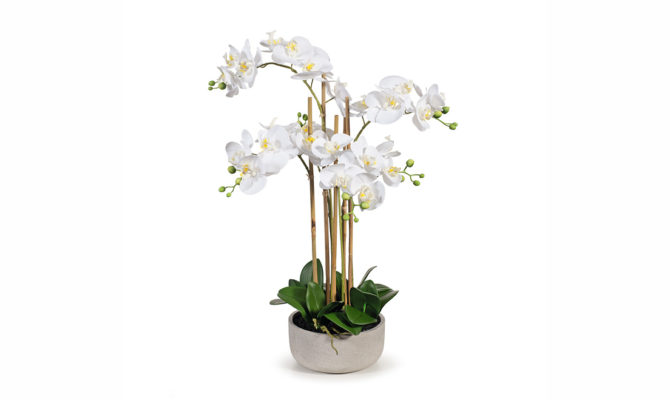 Orchid Phalaenopsis in Bowl – large Product Image