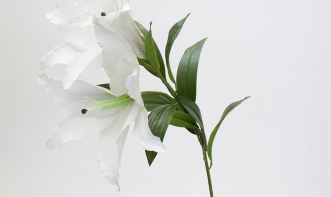 Giant Casablanca lily – white Product Image