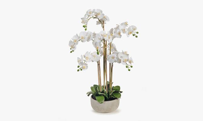 Orchid Phalaenopsis in Bowl / x-large Product Image